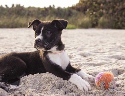 Hinweis: Hunde und Strand